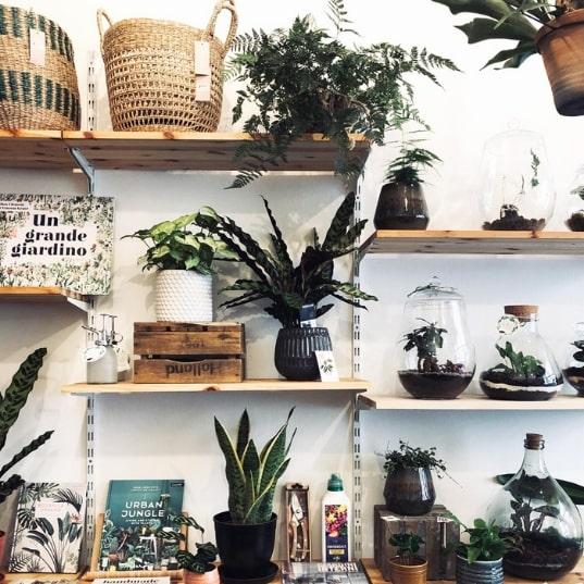 WILD Milano: Be WILD nella House Plant Boutique di Porta Venezia