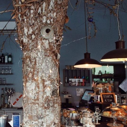 Share Wood, dove mangiare un toast con l'avocado di fianco a una betulla