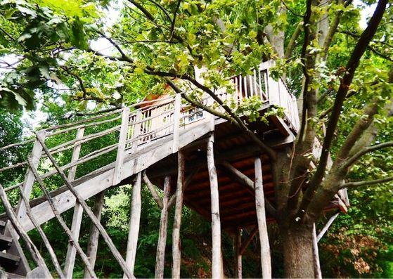 Una notte in una casa sull'albero: Il Giardino dei semplici