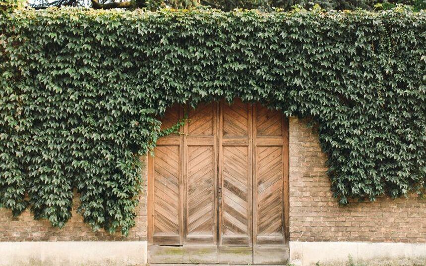 Balconi verdi, verdissimi |    Torino smart respira