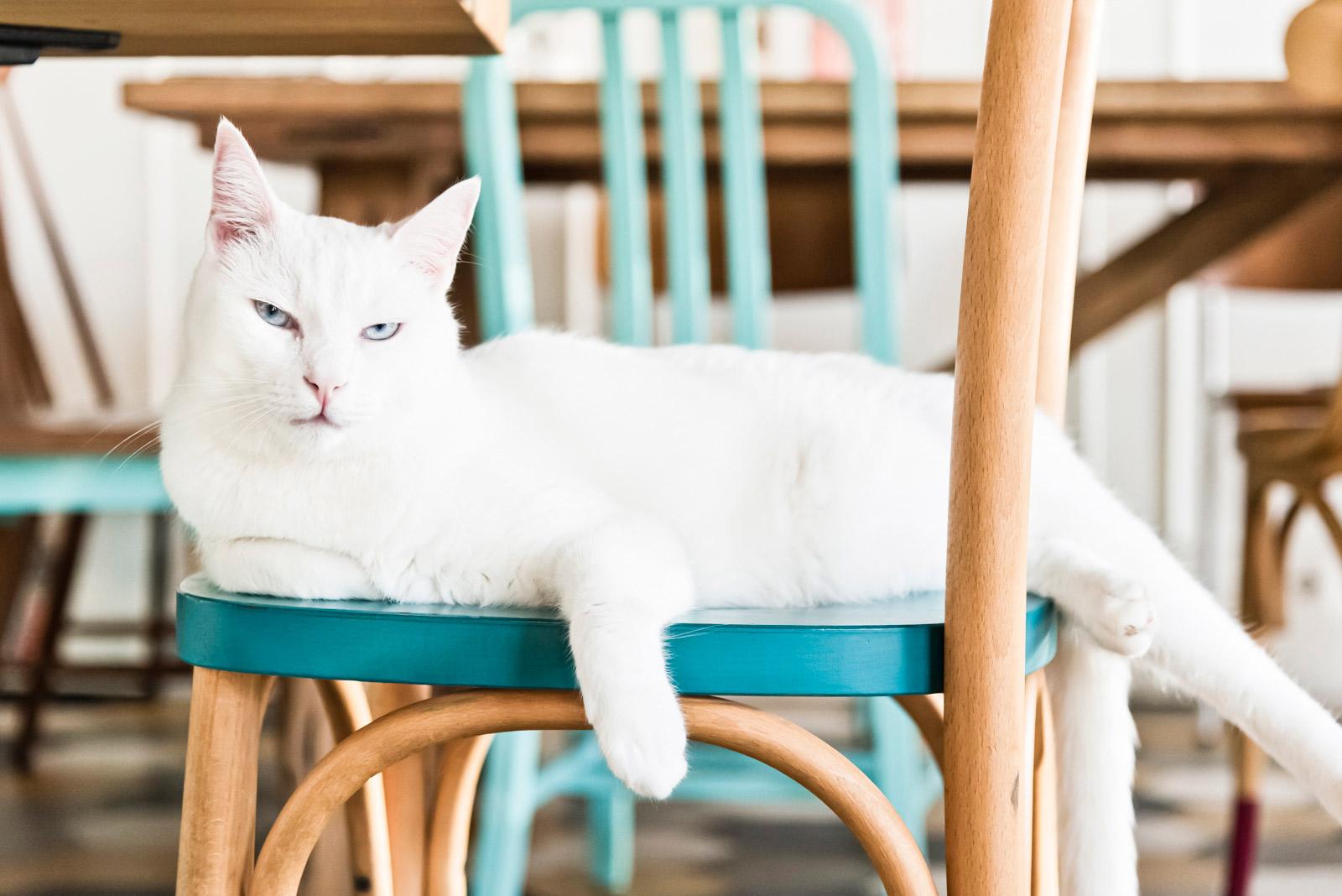 Romeow cat bistrot a Ostiense: una felice oasi felina e veg