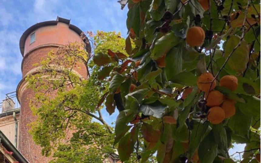 L'Orto Botanico di Brera: un'oasi di silenzio in pieno centro