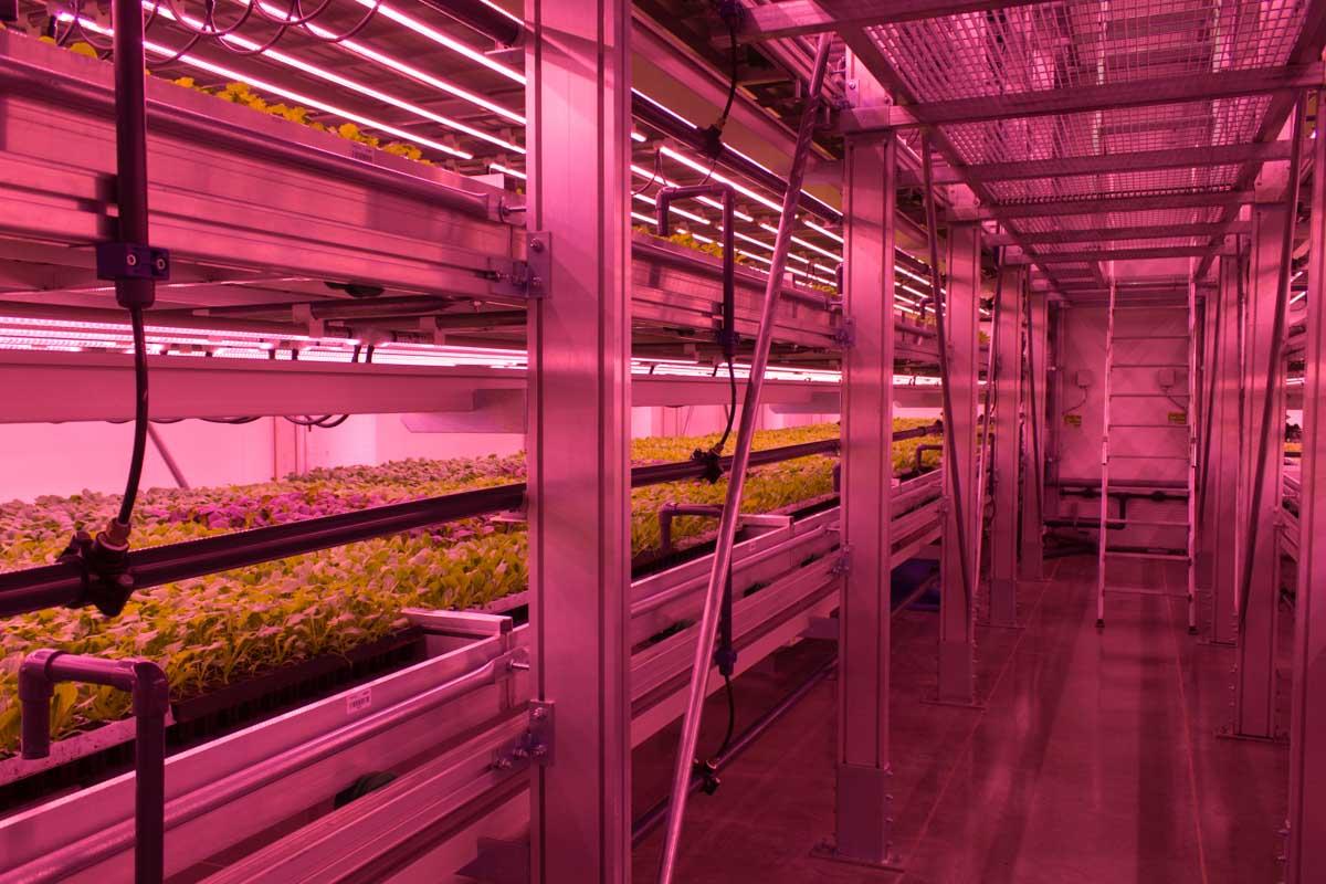 vertical farm milano