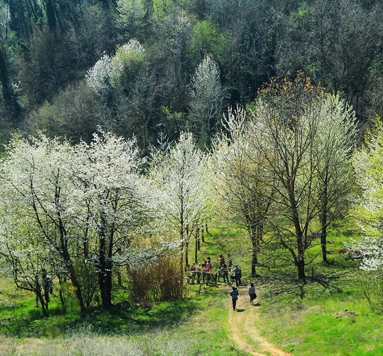 Amore a prova di Bosco sulle colline del Monferrato