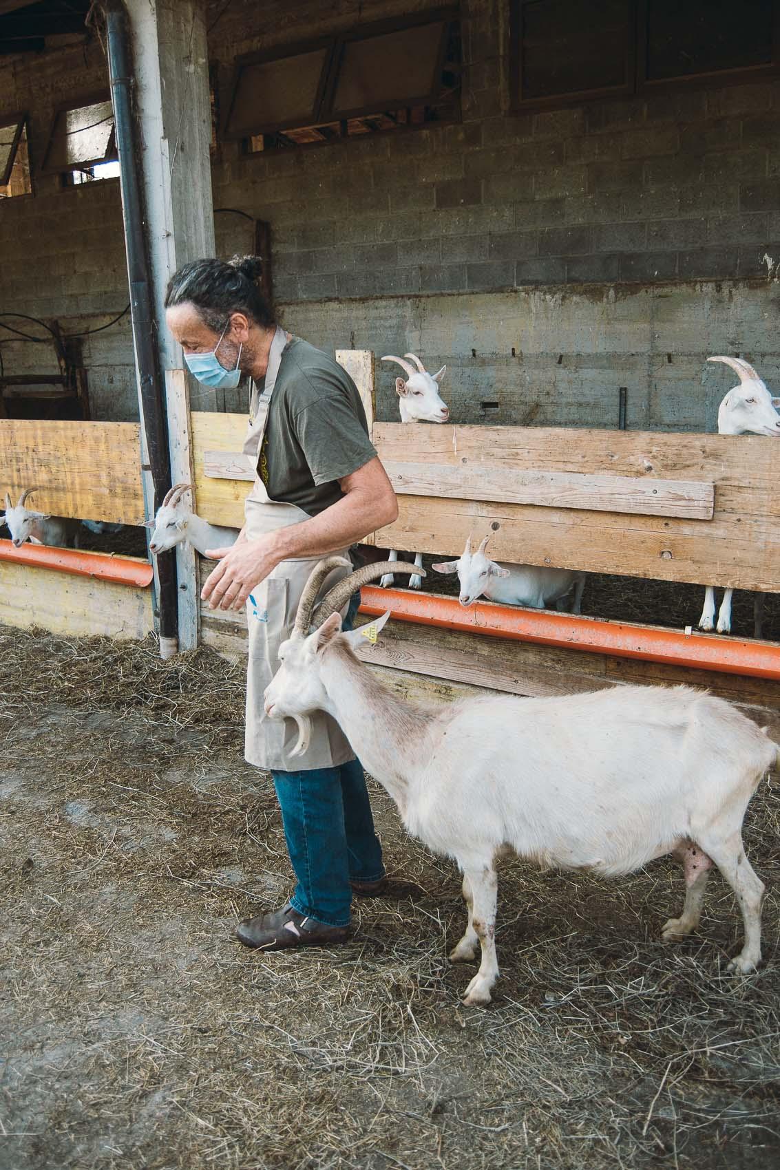 azienda-agricola-ca-d-andrei-biella-formaggi-di-capra-11