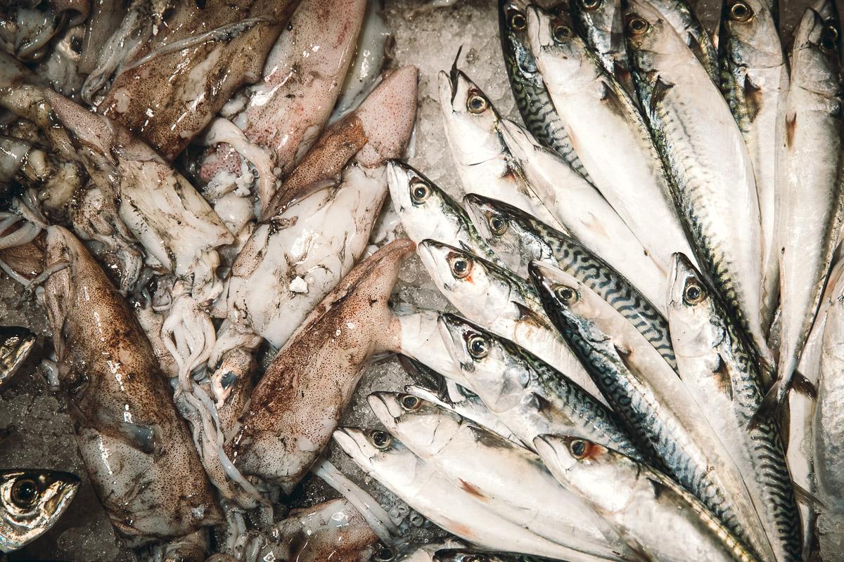 pesca-sostenibile-eataly-torino-nando-fiorentini-20
